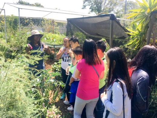 Youth Outdoors: Making Salve at Spiral Gardens